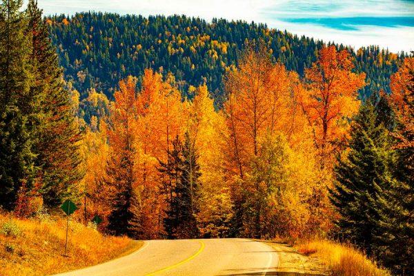 130 Allan_Forest_Autumn19