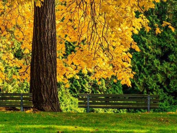 140 Allan_Forest_Autumn18