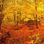 Allan Forest - Autumn