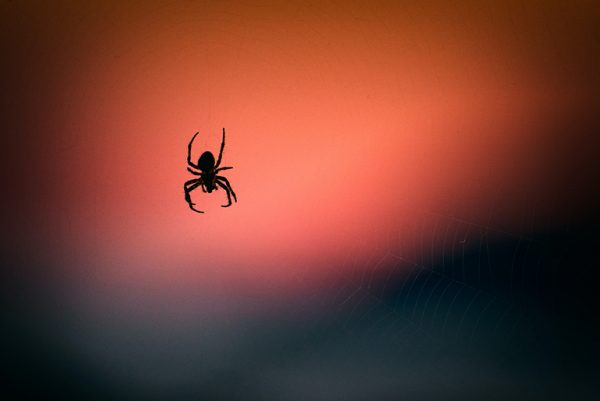 Spider by Vidar Nordli-Mathisen