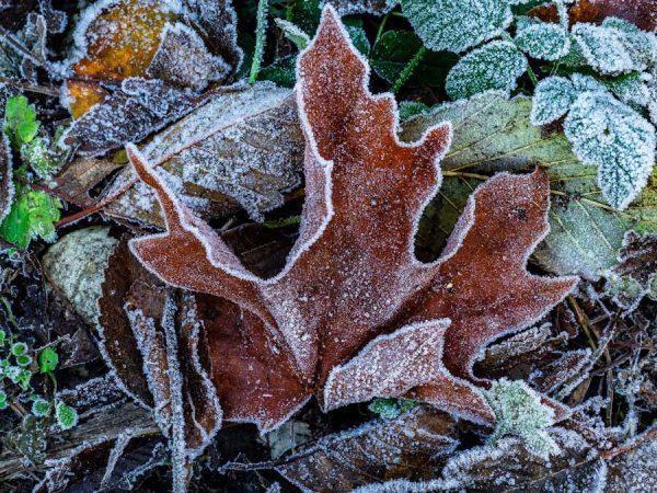 010-Allan_Forest_Winter_10