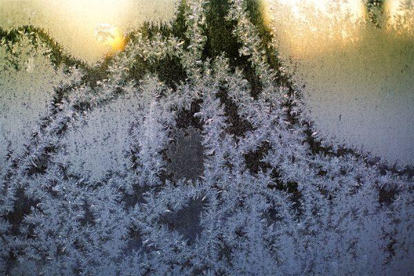 050 Allan_Forest_Winter_16