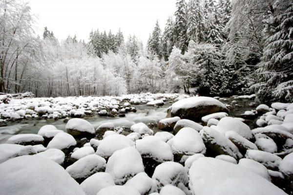 100 Allan_Forest_Winter_17