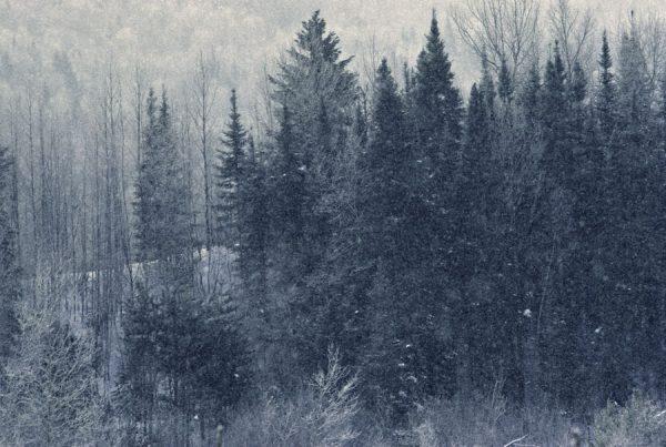 130 Allan_Forest_Winter_23