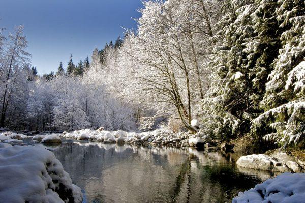 140 Allan_Forest_Winter_21
