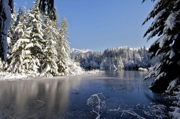 150 Allan_Forest_Winter_20