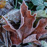 Allan Forest Winter photographs