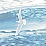 seagull radhika