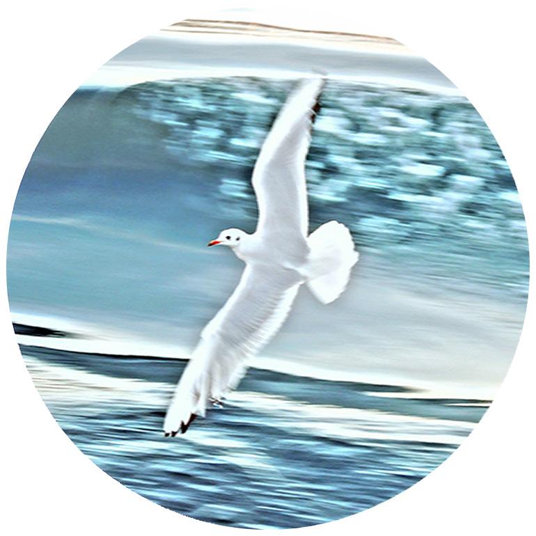 Seagull by Radhika