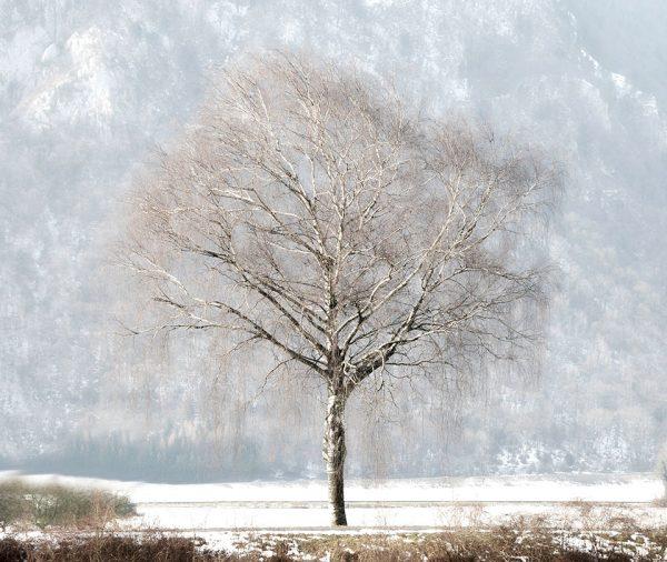 020-Darpan-winter-(11)