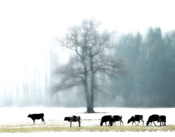 043-Darpan-winter-(12)