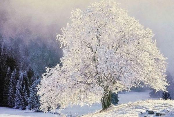 080-Darpan-winter-(5)