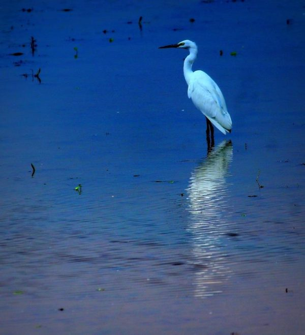 Stand still, like ripples