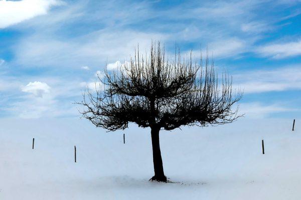 113-Darpan-winter-(14)