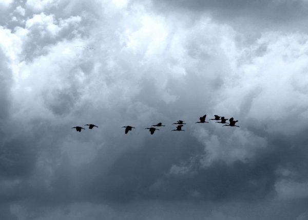 Pilgrim Flock