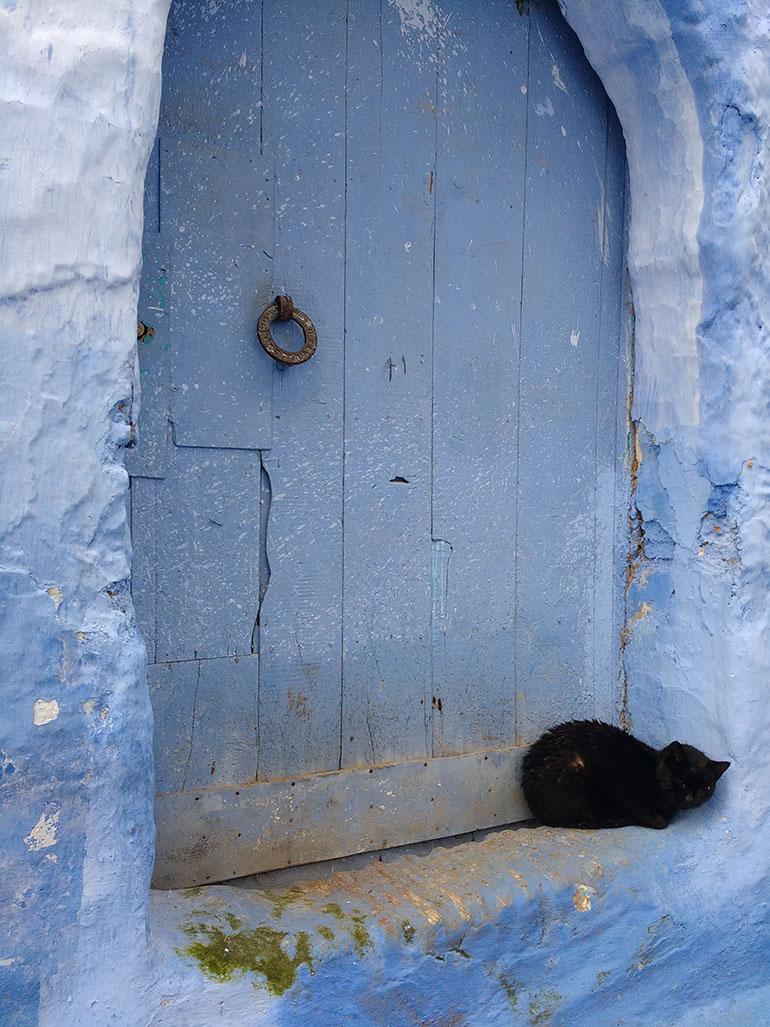 blue door with cat