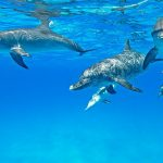 Dolphin Healing and Relaxation in The Bahamas