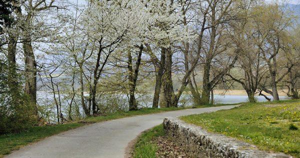 010-Darpan-Spring-(1)