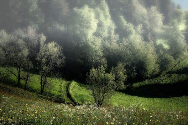 090-Darpan-Spring-(14)