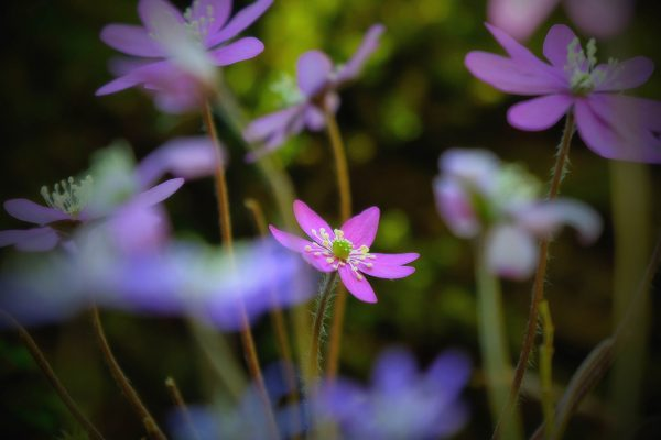 110-Darpan-Spring-(7)