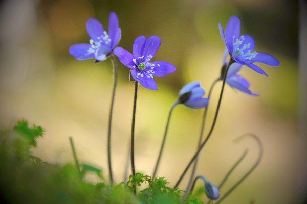 120-Darpan-Spring-(4)