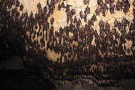 Bat cave in Pokhara