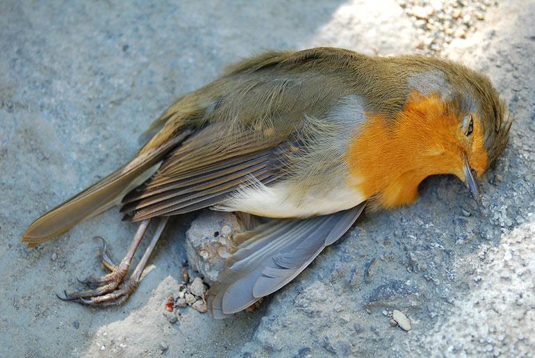 read robin