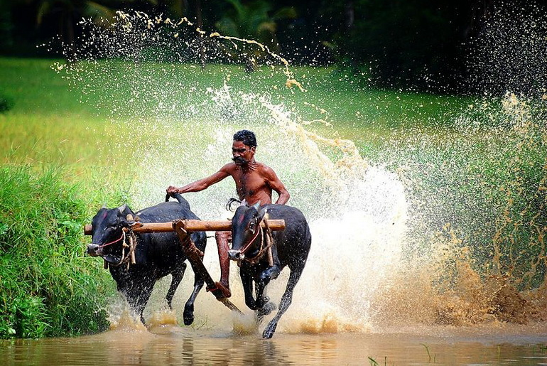 Fetching water for Buddha