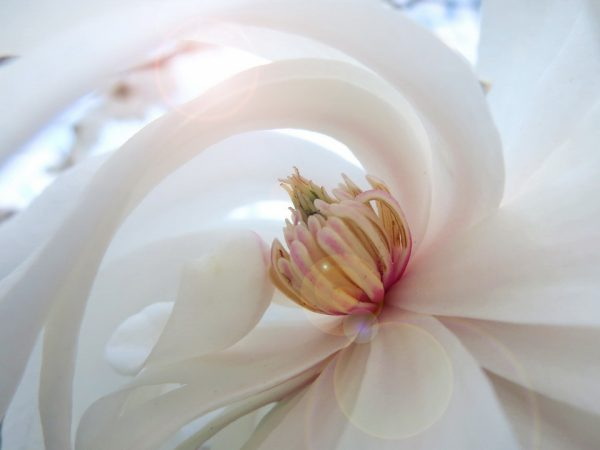 Ateet Flowers (1)
