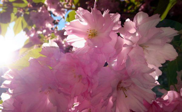 Ateet Flowers (5)