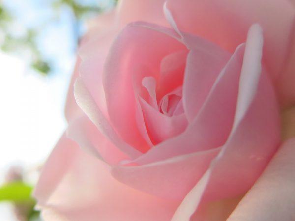 Ateet Flowers (6)